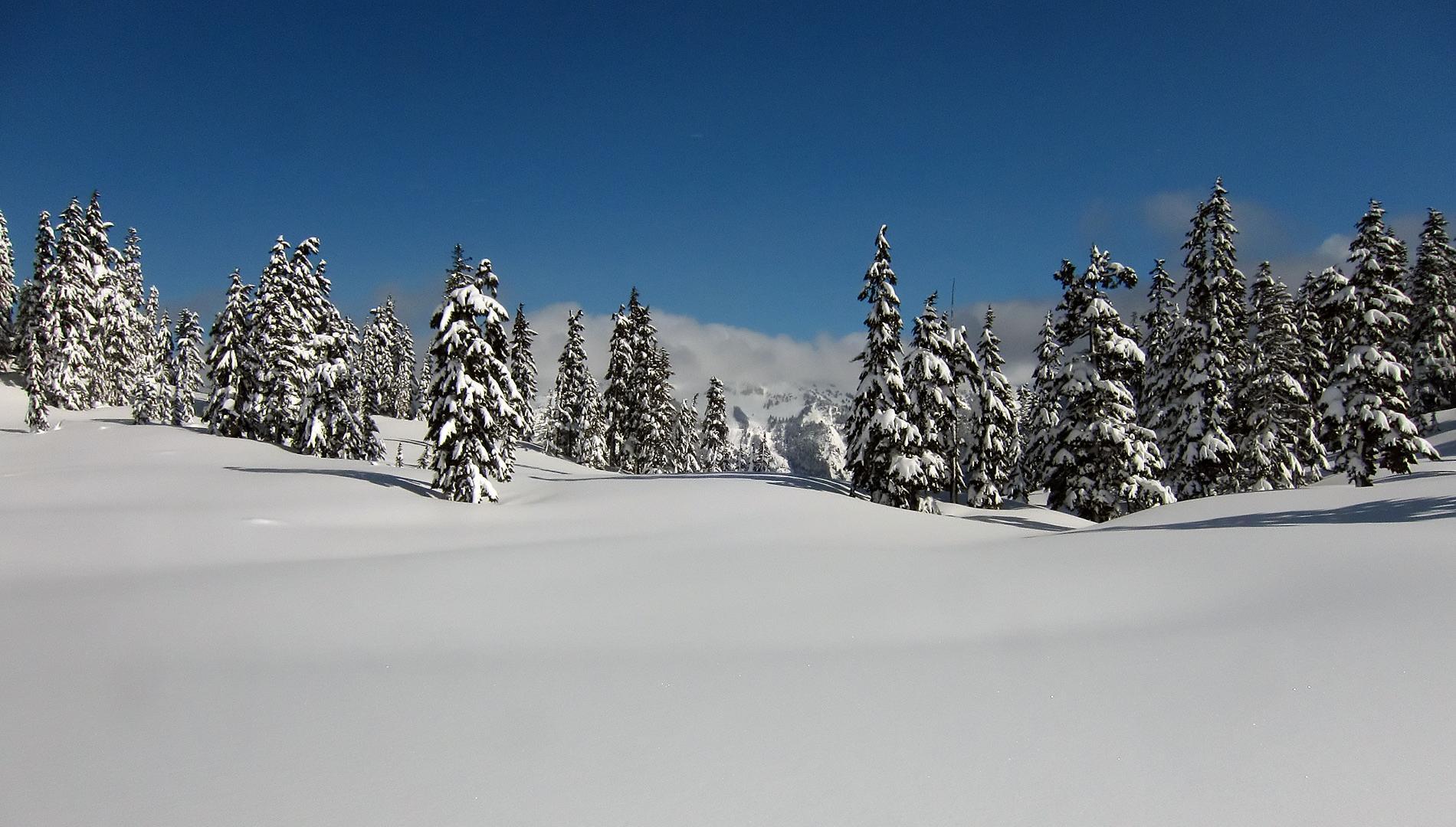 Cascade Mountain Scenery